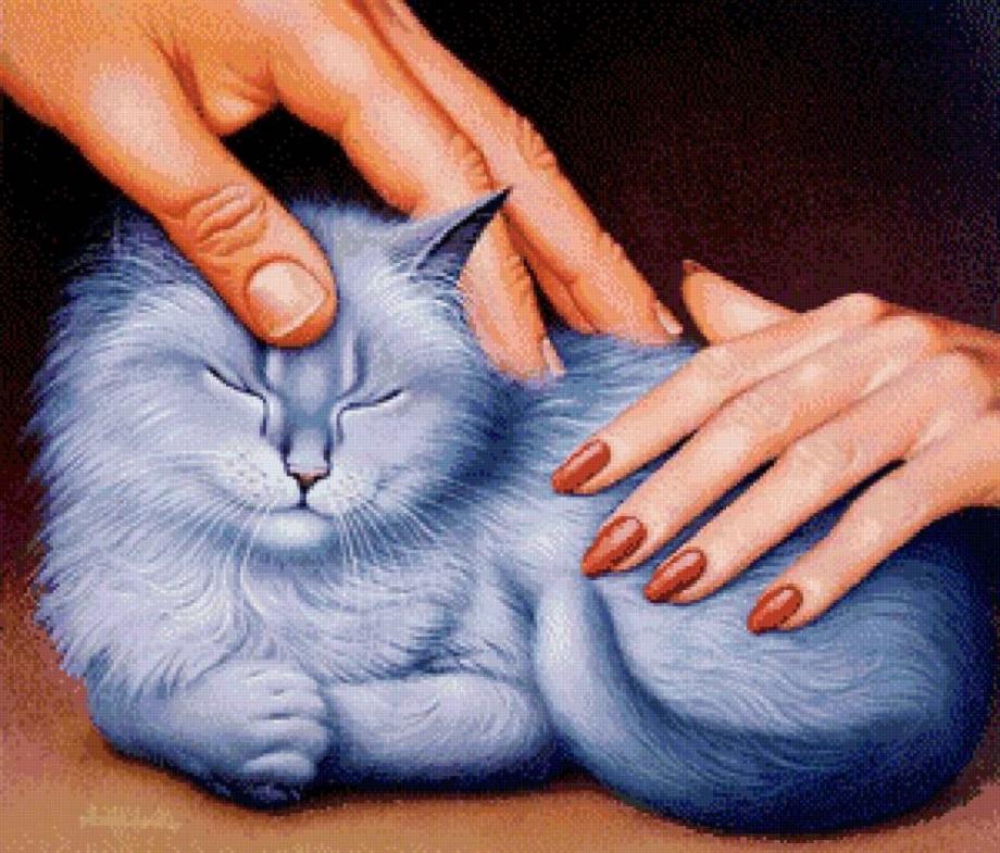 Про любовь и котиков, или как найти друга на Avito